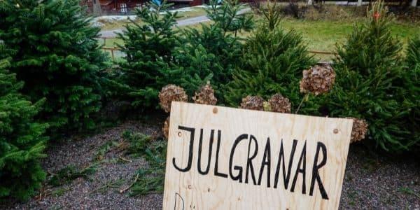 Weihnachten in Schweden Weihnachtsbaum